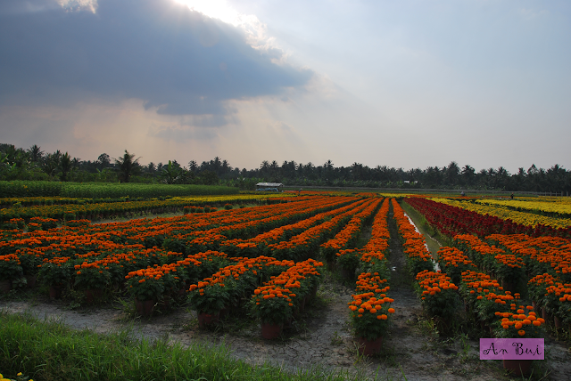Visit the flower village of My Phong the days before Tet Holiday