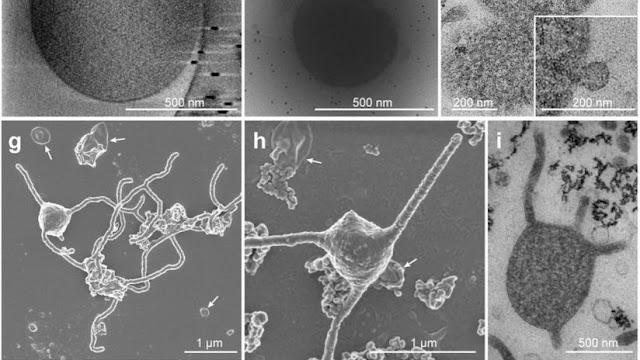 Descubren un microorganismo que puede explicar el origen de la vida