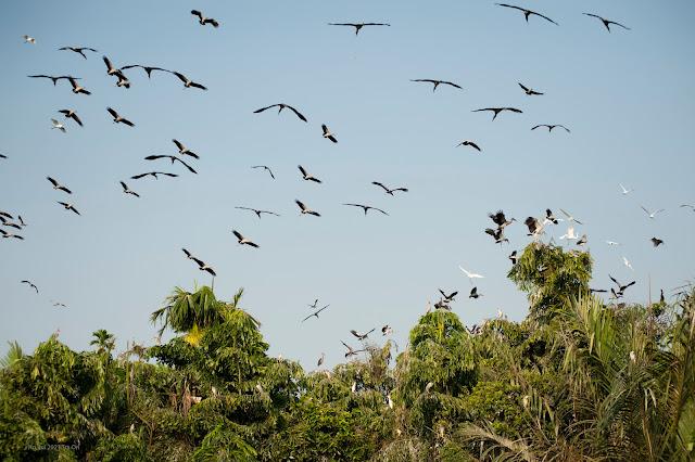 Chim mỏi về vườn tìm chốn ngủ