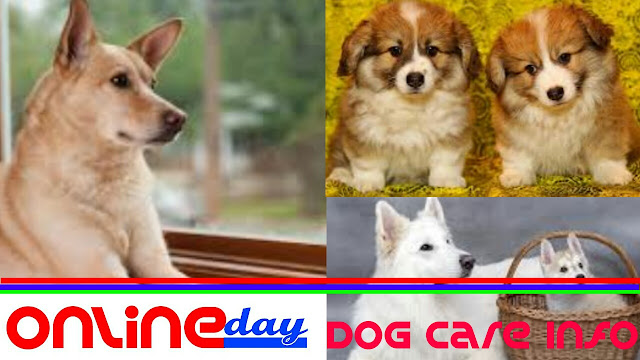 Dog care information and Basic guide to take care of a dog at home