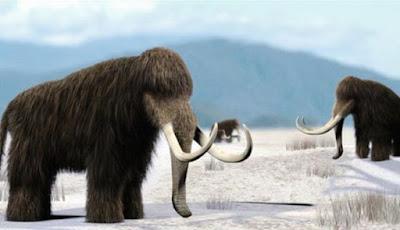 Krisis Genom Menjadi Awal Kepunahan Mammoth Berbulu