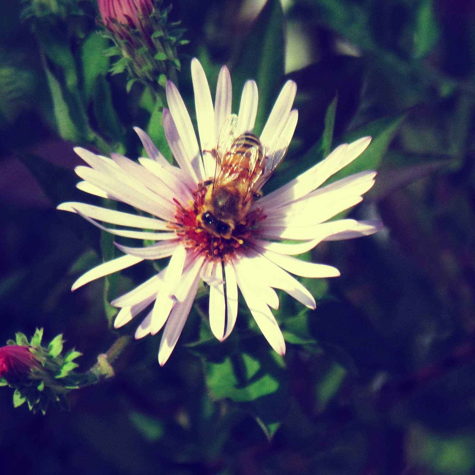 A blooming flower with a bee named Hazel pollinating it