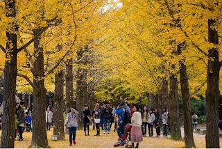 Musim Gugur Korea