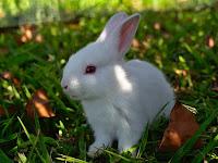 Sate kelinci