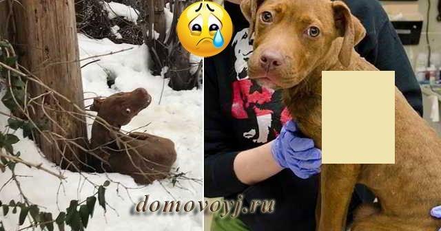 Дрожал и кричал от страха: 7-ми месячного щенка выкинули зимой, жестко привязав его к опоре электроснабжения в безлюдном переулке – Видео спасения малыша!