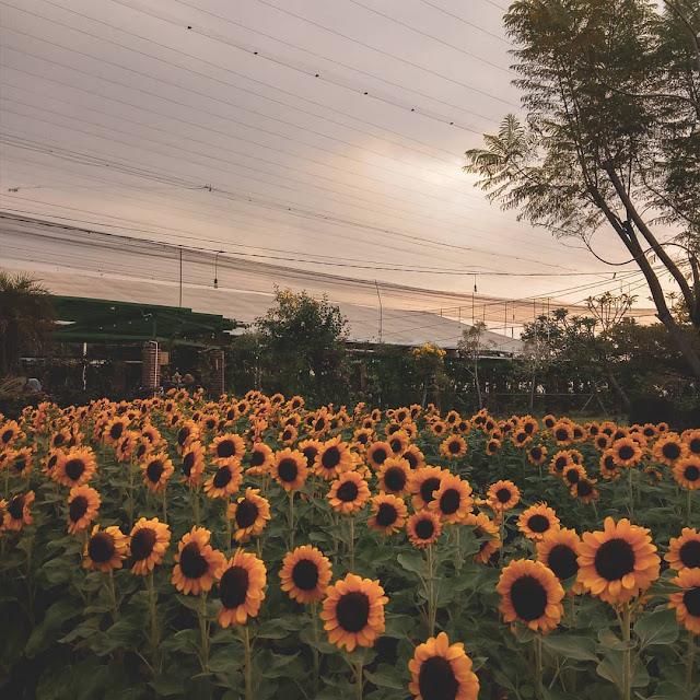 Sky Garden PVJ