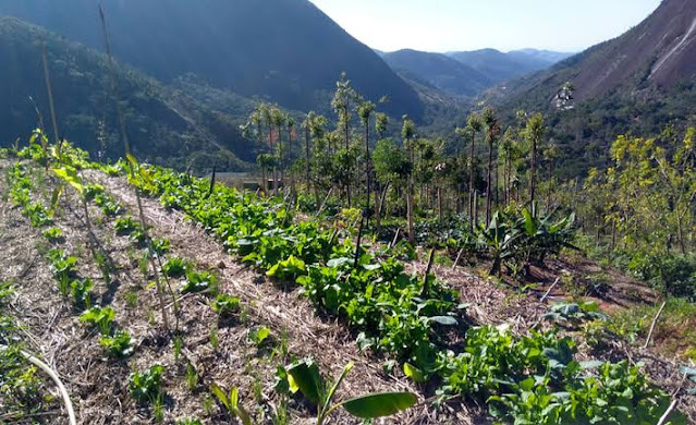 Agroecology farming in Africa: Climate change and sustainable food production