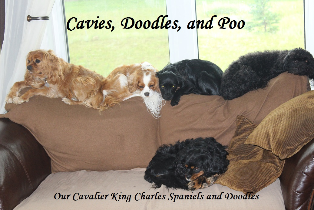 Cavies, Doodles and Poo