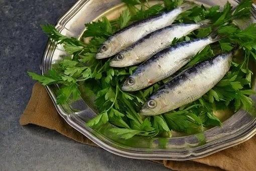 Sardine fish in marathi