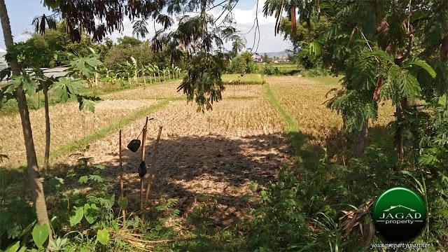 Tanah Sawah dekat Pusat Kota Bantul