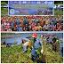 Bersama Masyarakat Minahasa, TNI AL Bersih - Bersih Eceng Gondok Di Danau Tondano