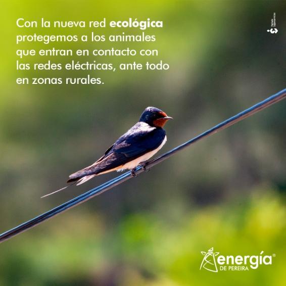 La nueva red ecológica