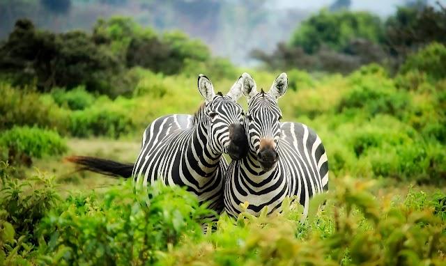 11 Destinasi Kebun Binatang Ragunan yang Wajib di Kunjungi di Jakarta