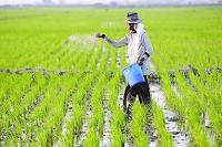 Pengertian Agraris, Hasil Pertanian, Keuntungan, Masalah, dan Contohnya