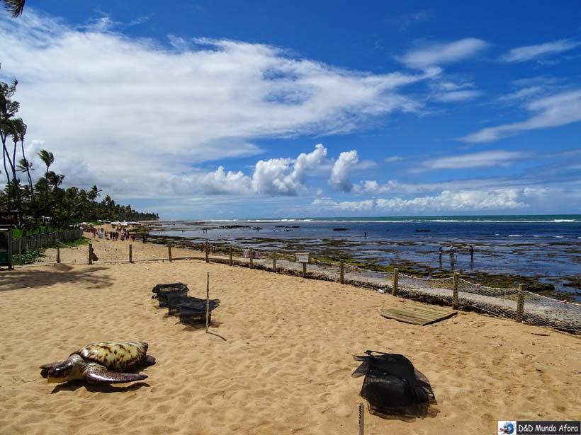 cercado de incubação Projeto Tamar - Praia do Forte (Bahia)