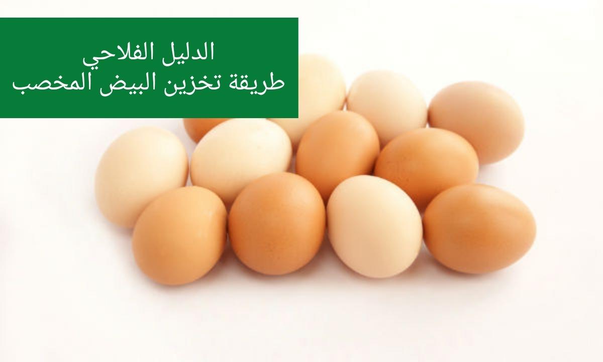 طريقة تخزين البيض المخصب