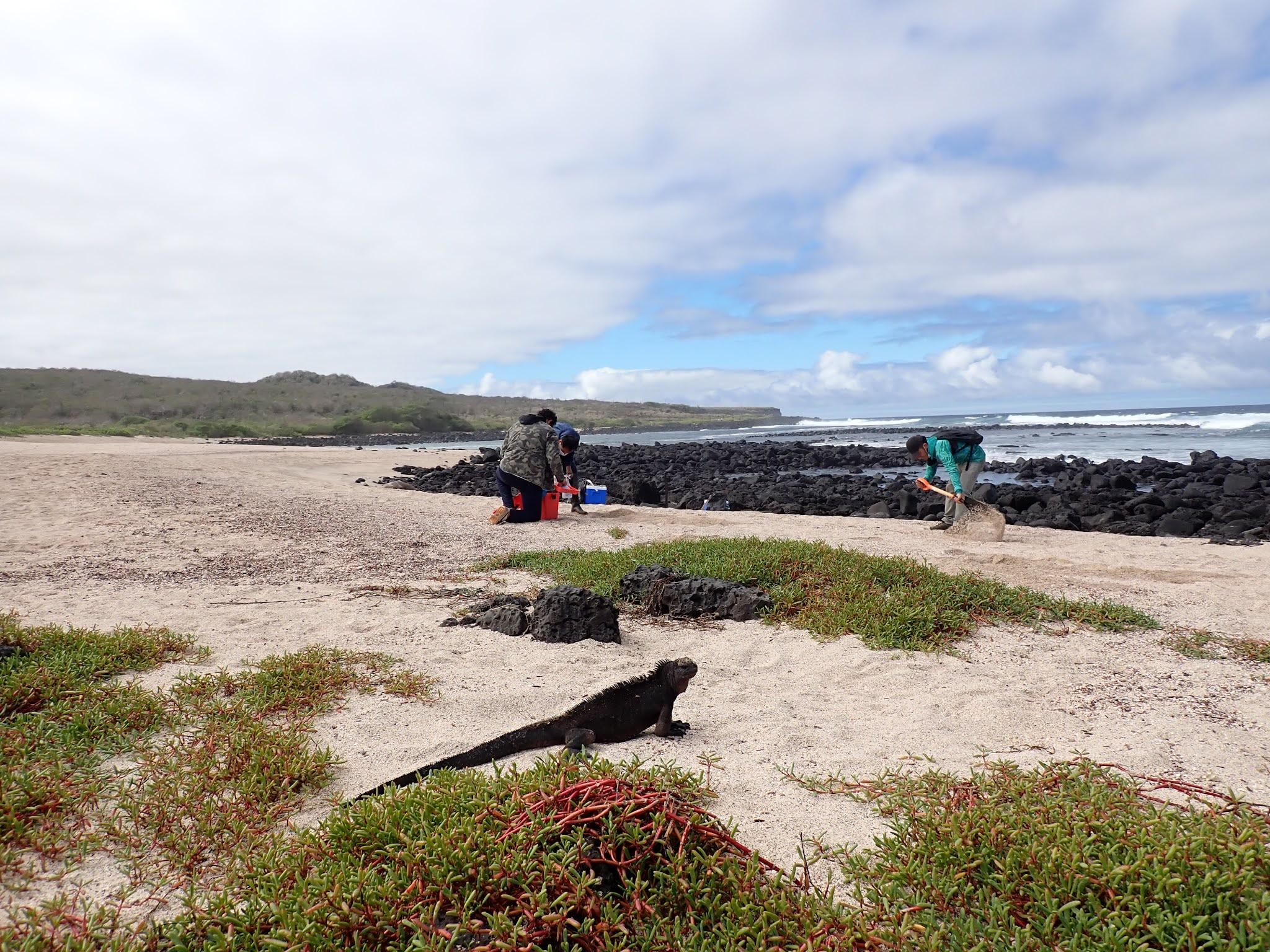 Código Genético de Galápagos; el mayor proyecto de ciencia ciudadana que se desarrolla en el Archipiélago