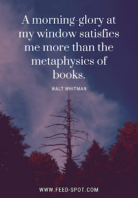 A morning-glory at my window satisfies me more than the metaphysics of books. __ Walt Whitman