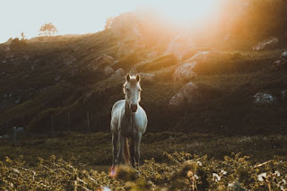 White Horse - Photo by Tiago Almeida on Unsplash