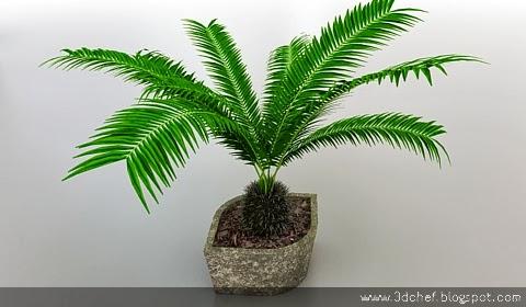 free 3d model wild palm