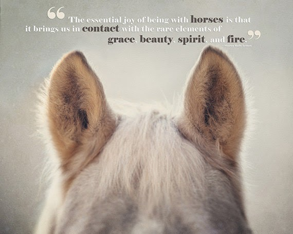 Inspirational Horse Quotes. QuotesGram