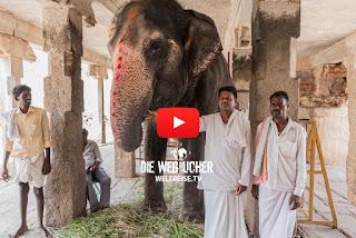 Virupaksha Tempel in Hampi Indien mit Elefanten und Affen WELTREISE