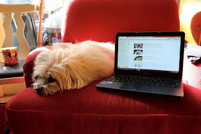 Catching up on Blogs with Trixie