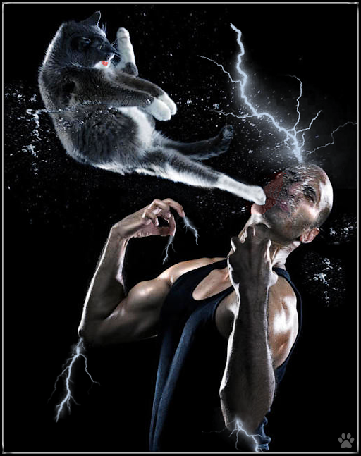 Photoshopped Cat picture • Don't mess with Bruce Lee cat! He's faster than light and you'll be 'struck'