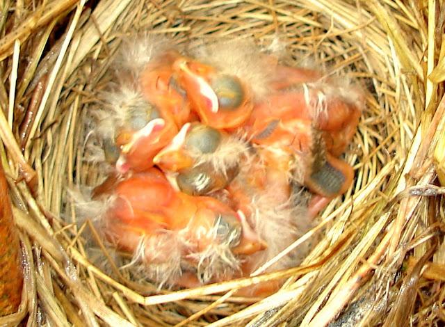 babybirdsasleep.jpg