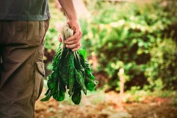 5 super alimentos para superar sua saúde