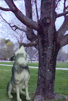 Wolves in My Yard and Penguins in My House! - Fun With Augmented Reality in Search