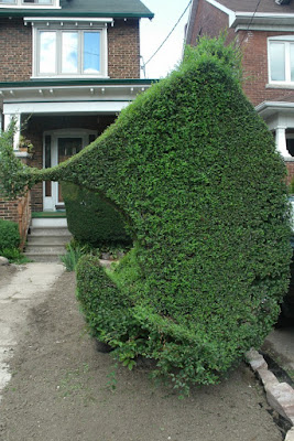 Unusual Siberian Elm hedge by garden muses--not another Toronto gardening blog