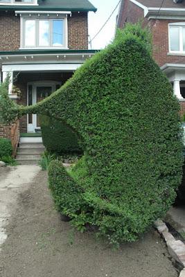 Unusual Siberian Elm hedge by garden muses--not another Toronto gardening blog