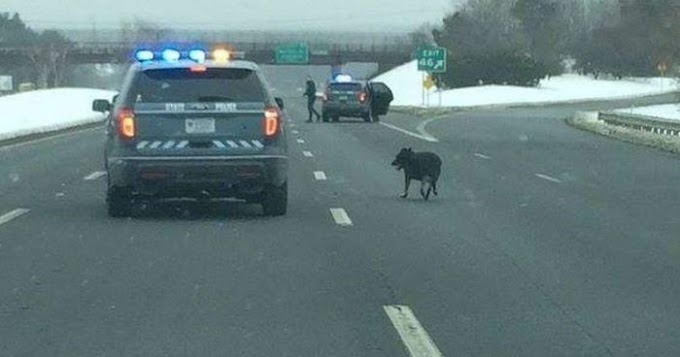 Cops Shut Down Busy Highway To Save Scared, Lost Dog