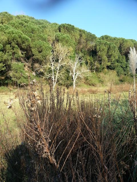 zona mas cercana a parque fluvial