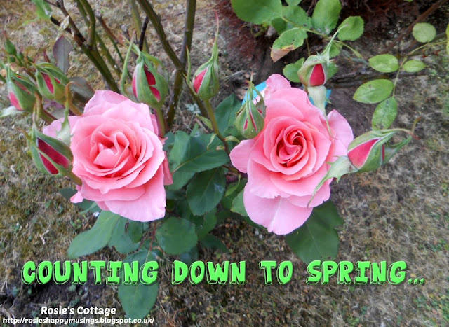 Countdown to spring...