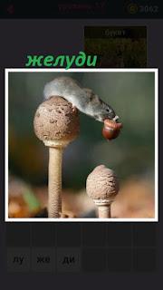 стоят два гриба, на одном из них мышка в пасти находится желудь