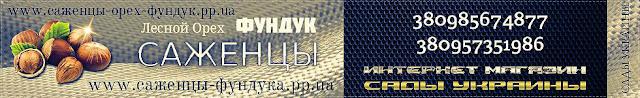 Купить саженцы фундука Шедевр Украина, 0957351986, 0985674877, SetNut