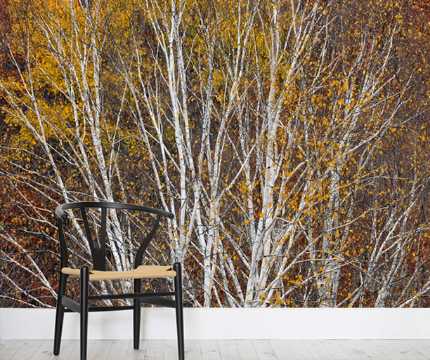 http://www.photowall.fi/photo-wallpaper/silver-birch-hillside