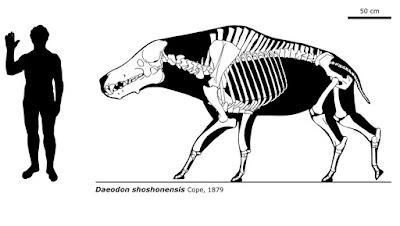 Tamaño Daeodon shoshonensis