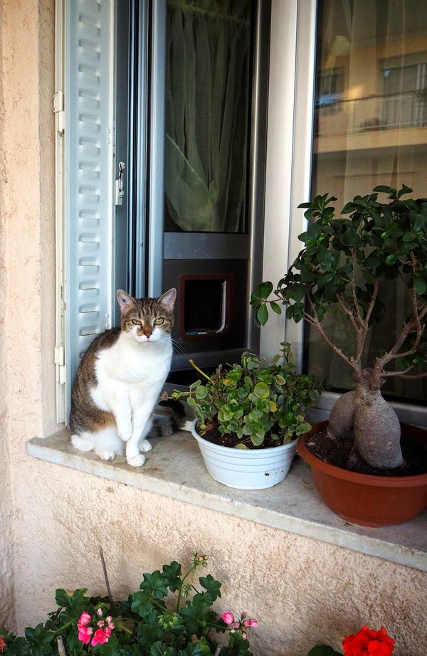 window cat france