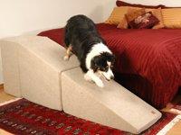 rampa para cães border collie
