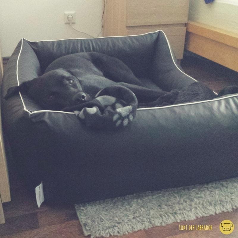 Schwarzer Labrador im Kunstleder Körbchen