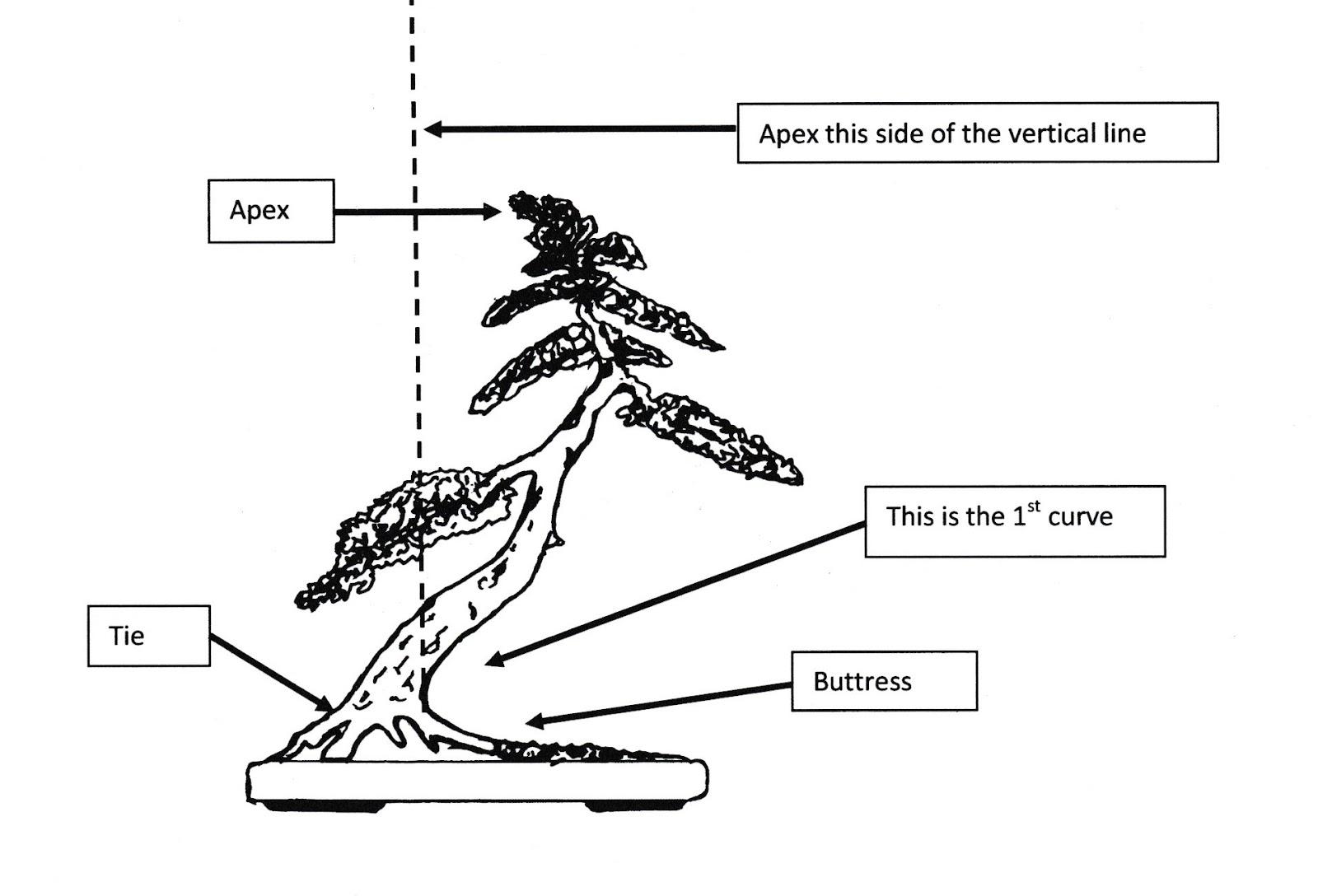 practical bonsai