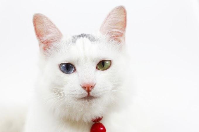 Estos son los gatos más bonitos del mundo
