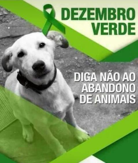 Dezembro Verde: Diga não ao abandono de animais