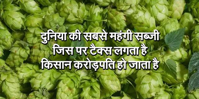दुनिया की सबसे महंगी सब्जी कौन सी है जिस पर टैक्स लगता है, किसान करोड़पति हो जाता है | GK IN HINDI