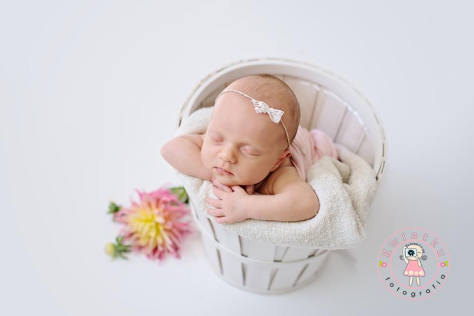 Dalie, fotografia noworodkowa