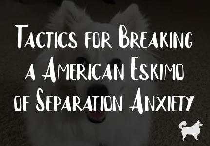 Tactics for Breaking a American Eskimo of Separation Anxiety