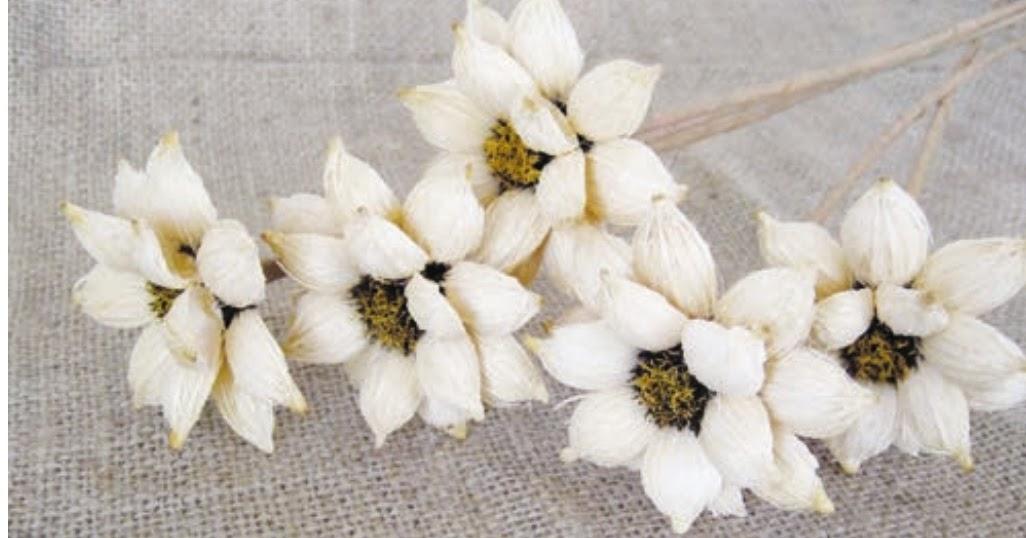 Kerajinan Tangan Membuat Bunga Dari Biji Waru Dan Biji Palem Putri Wawasanku